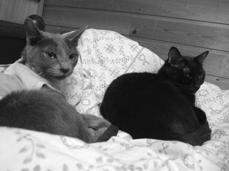 cats-キキ・ジジ