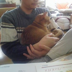 おとーにゃんだいしゅき~(2008.02.16)