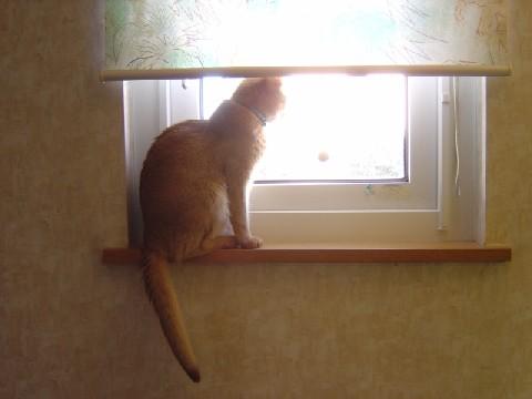 窓辺のジョゼフィンII(2008.03.12)