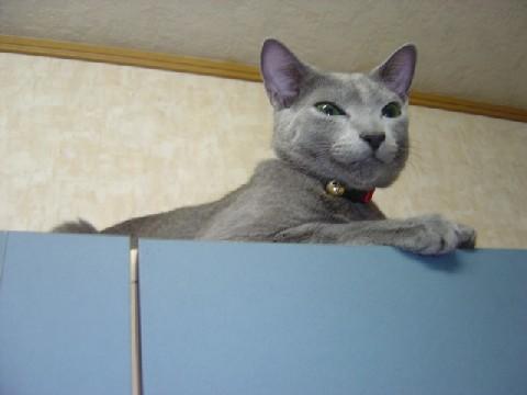 食器棚の上だよ(2008.03.18)