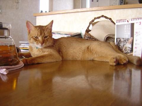 テーブルはねこさんのもの(2008.03.22)