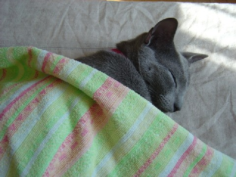 ベッドはねこさんのもの(2008.03.22)