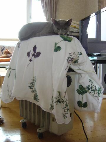 ぽかぽかなの(2008.04.27)