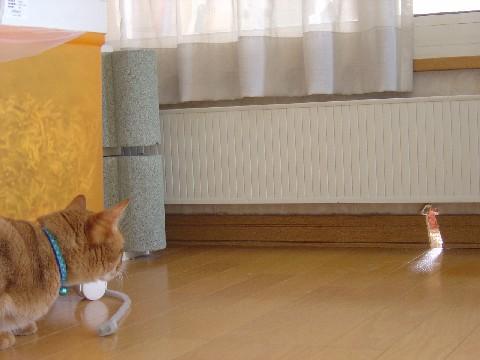 にゃにごとっ!(2008.04.29)