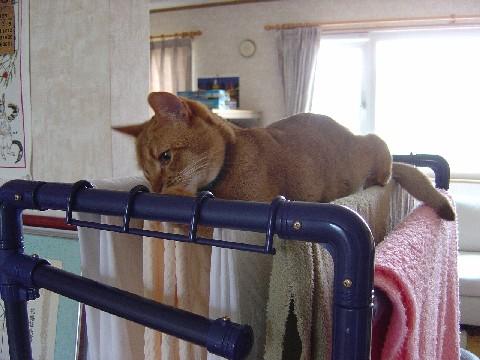 洗濯物の上だにゃ(2008.05.06)