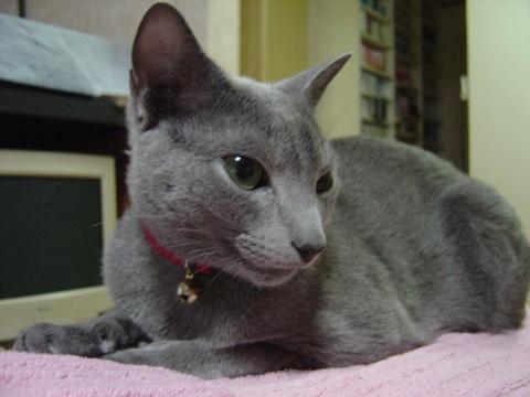 1歳の記念にゃん!(2008.05.12)
