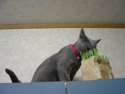 新鮮だとちがうにゃ~(2008.05.12)