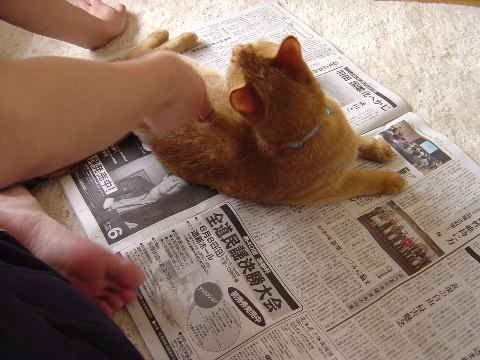 新聞だいしゅき~(2008.05.25)