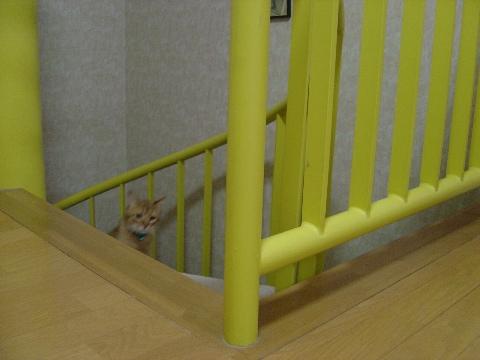 ジョゼフィン参上~(2008.05.28)