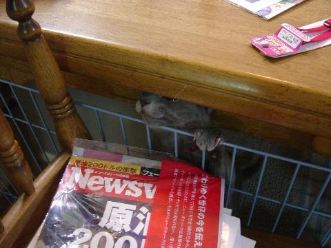 脱出中(2008.05.31)
