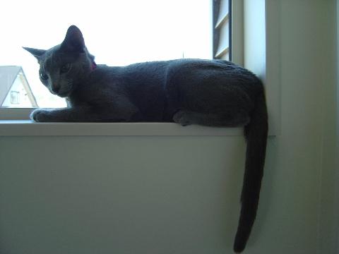 こんな窓だよ(2008.06.12)