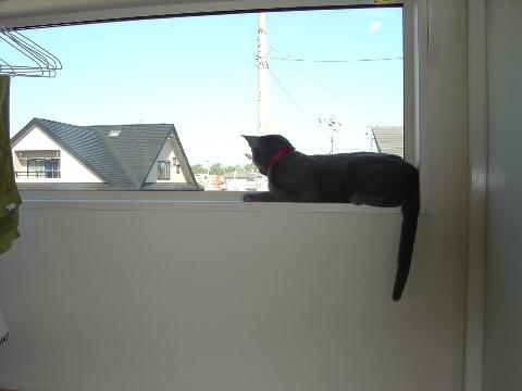 お二階だよ(2008.06.12)