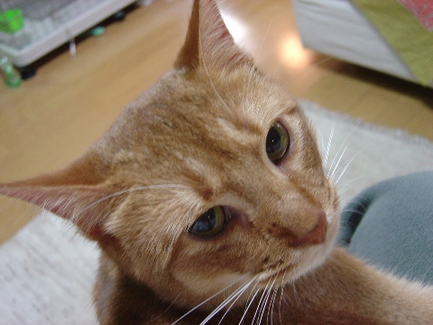 美にゃん?(2008.06.19)