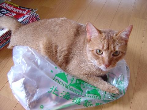 道新ジョゼフィン(2008.06.22)