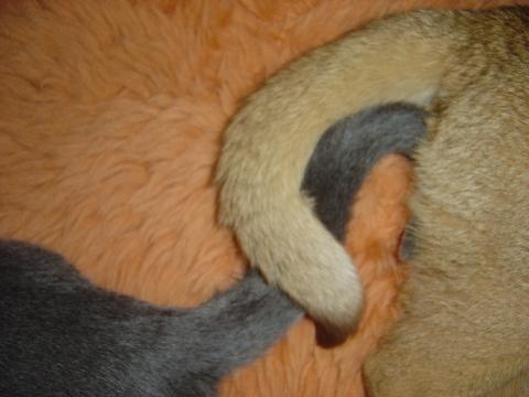 ビミョー(2008.06.22)
