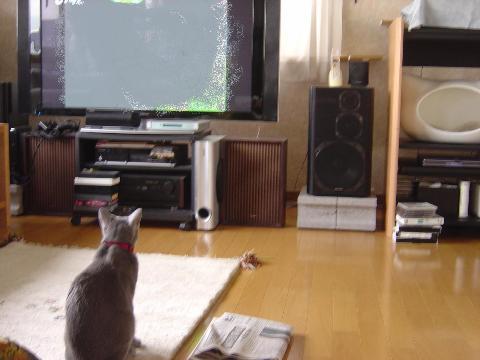 テレビ見てるの(2008.06.24)