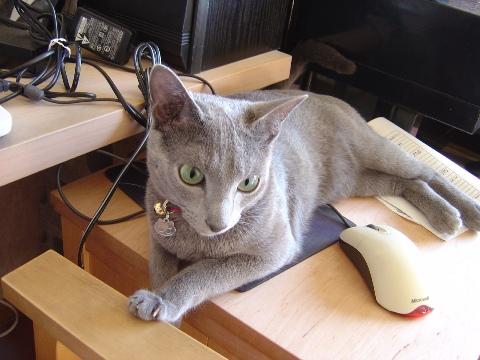 マウスジャック!?(2008.06.25)