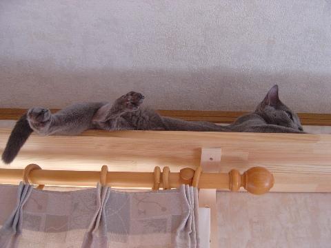 上から見下ろすいい眺め~(2008.06.29)