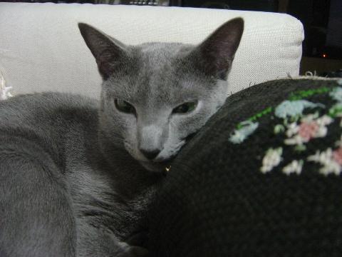 ちょっと眠いよ(2008.07.04)
