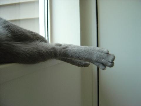 だらしない足(2008.07.05)