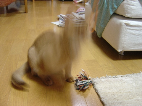 顔がにゃい!(2008.07.08)
