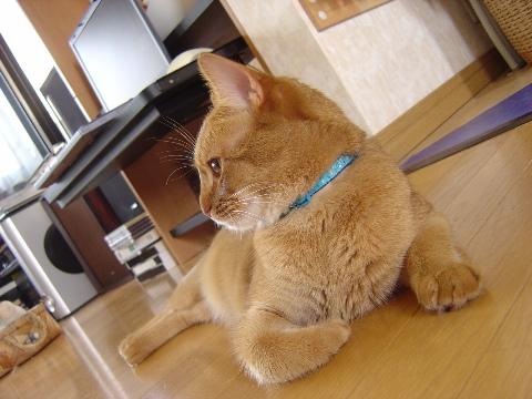 アクションカメラ風よっ(2008.07.12)