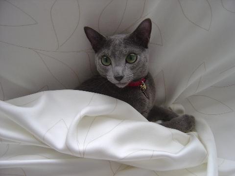 優雅にお昼寝を...(2008.07.12)
