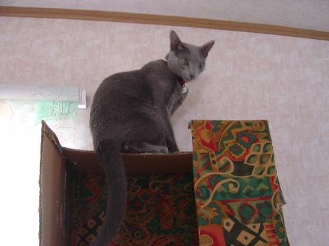 ニコライハウスにゃん(2008.07.13)