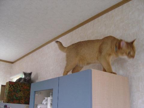 何してるにゃん?(2008.07.13)