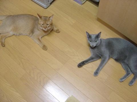 ごはんください(2008.07.14)