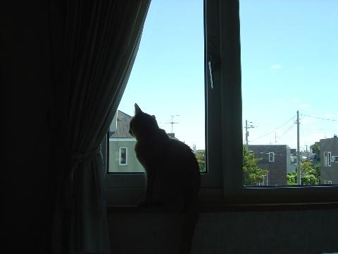 あらっ?(2008.07.26)