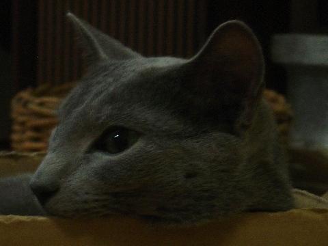 うつろ~(2008.07.29)