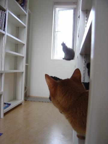 あたちの窓なのよっ(2008.08.03)