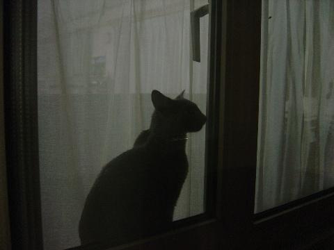 お外からパチリ(2008.08.04)