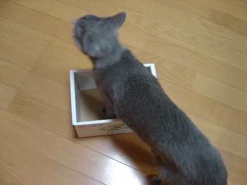 無理っぽい...(2008.08.07)