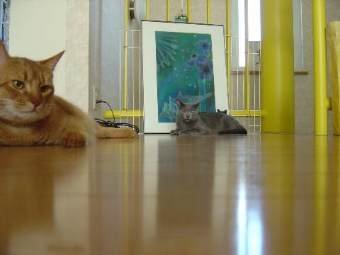 フローリング同好会(2008.08.07)