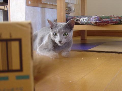 様子見様子見(2008.08.10)