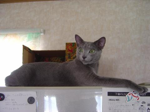 冷蔵庫の上で(2008.08.10)