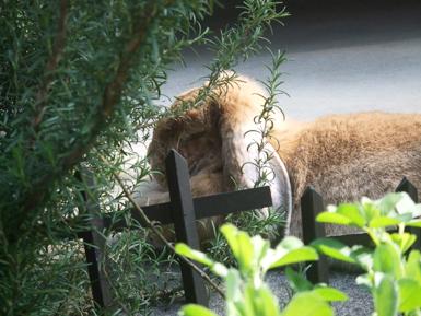 茂みの向こう隠し撮り 休憩