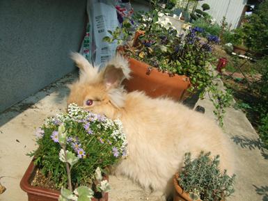 ガーデン散歩 花を見る2