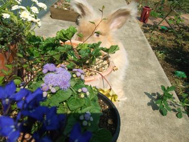 ガーデン散歩 花を見る