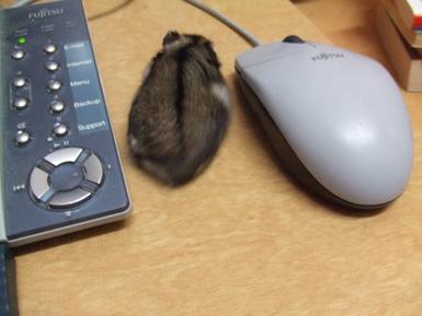IT糠 マウスとマウス