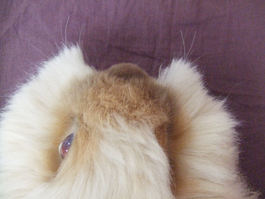 毛刈り 伸びてきたヒゲ