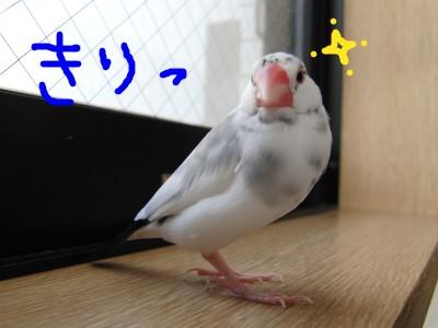 ラーメンツケメン僕イケメンでち!!!