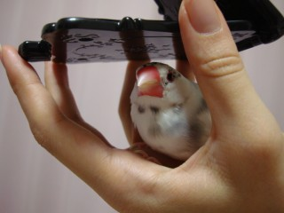 飼い主が化粧をする鏡と手の隙間でち