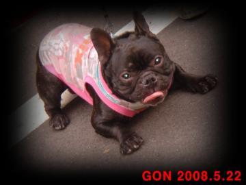 gon 491-1