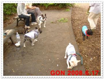gon 543-1