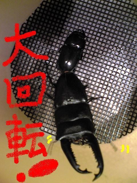 ぺありんぐ (6)