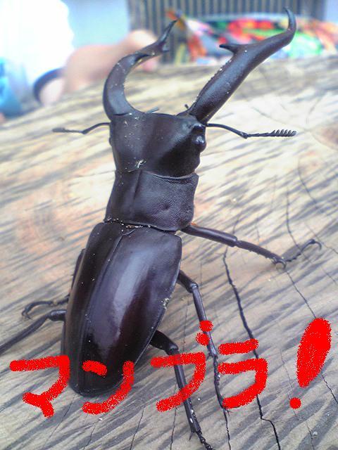 mannbura (2)
