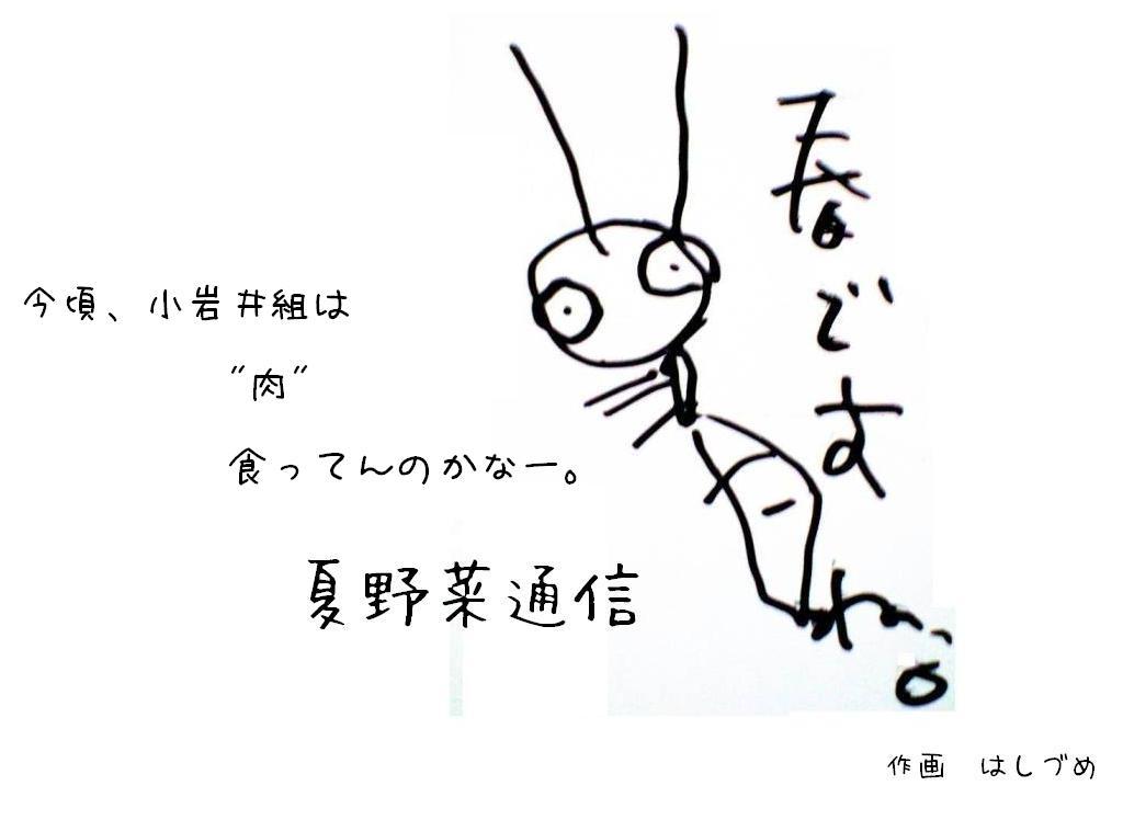 夏野菜通信4
